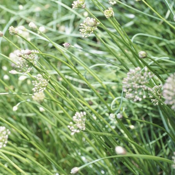 8 Herbs to start your Herbs Garden with!