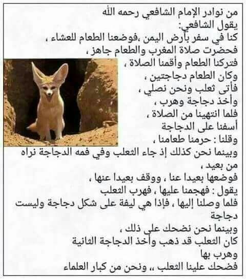 من نوادر الإمام الشافعي Cool Words Arabic Funny Powerful Words