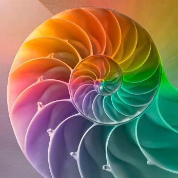 Shell #rainbow #shells #photography