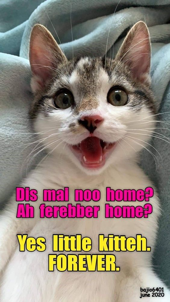 Yay Cat Memes Funny Cats Funny Cat Memes Most breeds have sharp talons on each foot, fangs sharp enough to sever a head, a tail powerful enough to break a human in half, and can breath fire. yay cat memes funny cats funny cat