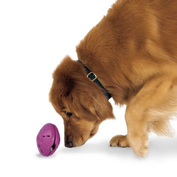 Anti-Boredom Twist'n Treat. For more ways to help battle your best friend's boredom, visit the Petplan pet insurance blog: http://ow.ly/9VW5n