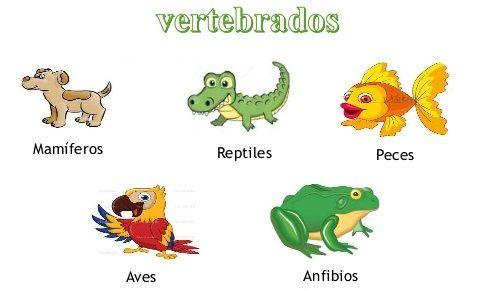Vertebrados e invertebrados + Actividades primaria | Vertebrados ...