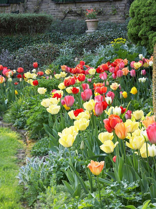 Beautiful Bulb Combinations Gardens Beautiful And Spring