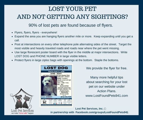 Pin by Lost Pet Services on Tips for Lost Pets Pinterest - lost pet poster