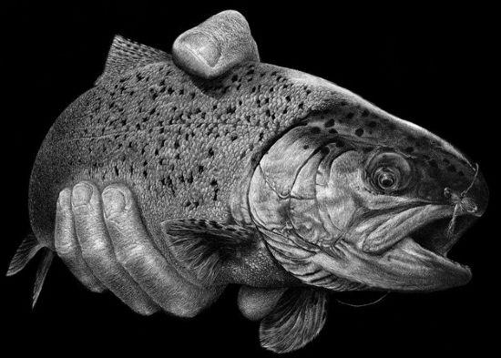 ScratchBoard Fish by tripp22 on DeviantArt