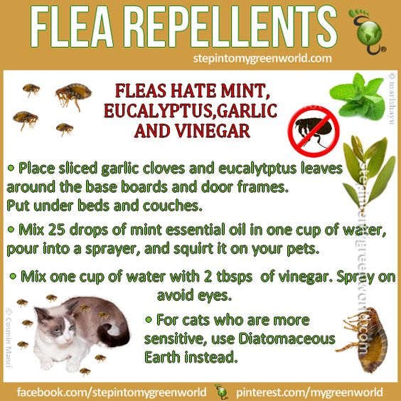 Flea Repellent For Cats Home Remedy