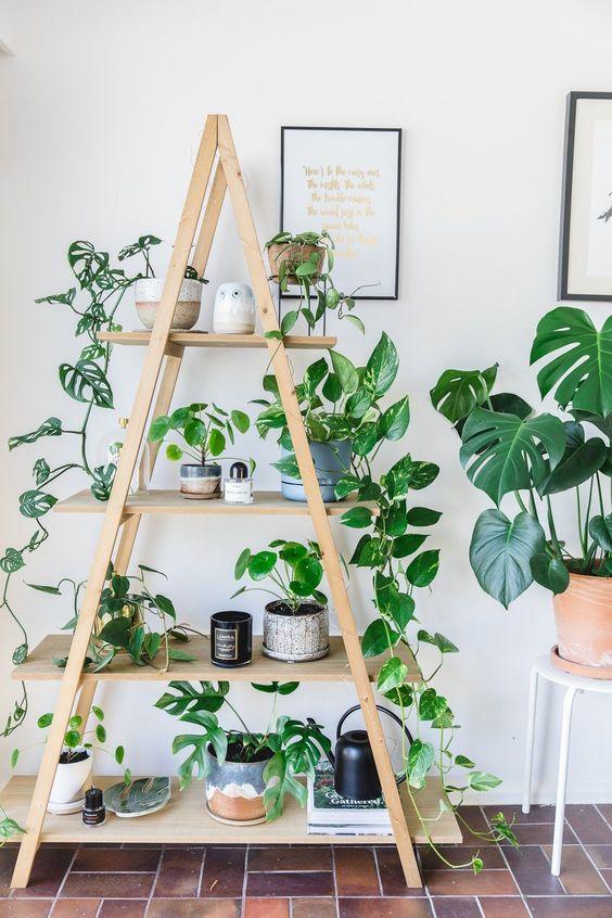 étagère déco avec des plantes