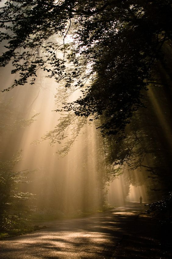 National Park Hoge Veluwe by Kenneth Verburg, via 500px