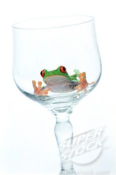 frog wine glass   SuperStock - Red eyed tree frog in wine glass
