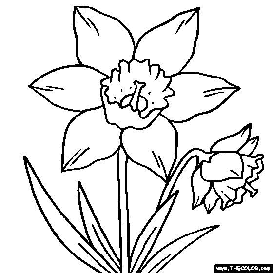Daffodil Flower Online Coloring Page And More Flowers Use Them To Applique Or Trace And Flower Coloring Pages Coloring Pages Online Coloring Pages
