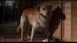 【ET】犬ハーヴェイ