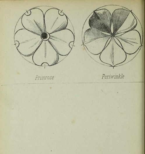 """This is an example illustration in a step by step drawing book which gives room for the reader to enter their sketches. From the public domain book, """"Gilbert's practical drawing book. (1874?)."""" Download in ebook formats here: https://archive.org/stream/gilbertspractica00gilb"""