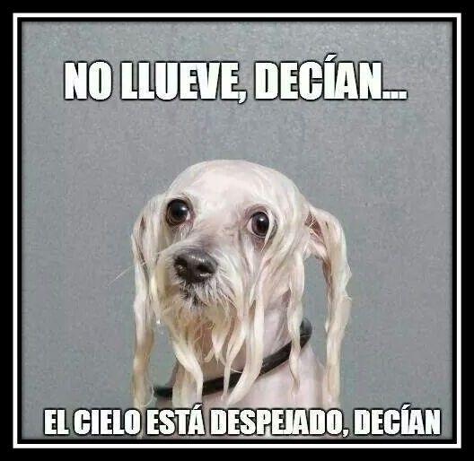 Memes E Imagenes Chistosas De Lluvia Para Facebook Imagenes De Perros Graciosos Fotos De Perros Graciosas Perros Mojados