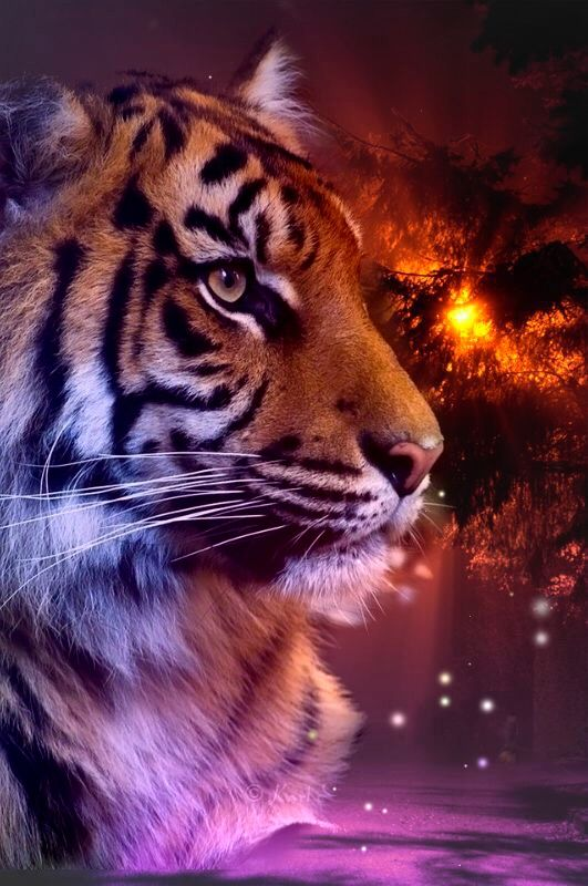 Wallpaper By Artist Unknown Big Cats Art Tiger Pictures