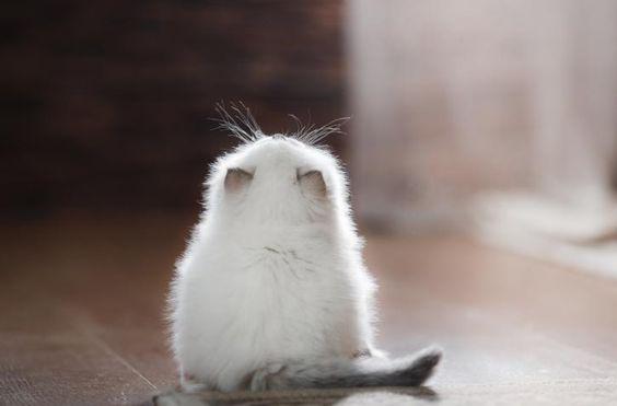 tiny cat ❤