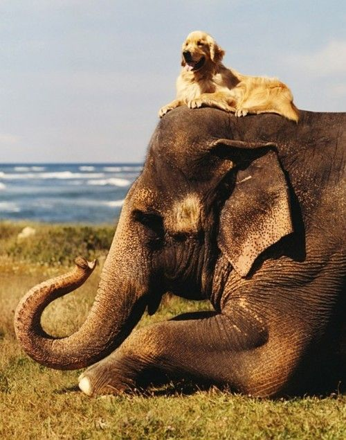 quirkycarousel:    Chillin' on an Elephant ~