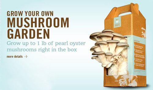 Buy Back to the Roots - Grow Your Own Mushroom Garden Kit at LuckyVitamin.com