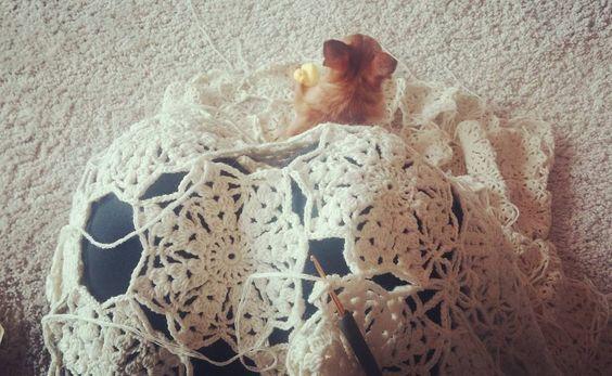 제피야... 비켜주면 더 좋겠지만... 너가 좋다면... 그냥 내가 안움직이고 해볼께.  #꽃블랭킷 #꽃모티브 #모티브블랭킷 #크로쉐블랭킷 #motifblanket #crochetblanket #crochetstagram by limpid_water