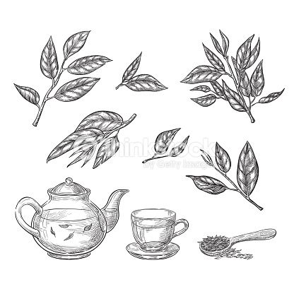 Green Tea Sketch Vector Illustration Leaves Teapot And Cup Hand Tea Leaves Illustration Tea Illustration Tea Leaves Tattoo