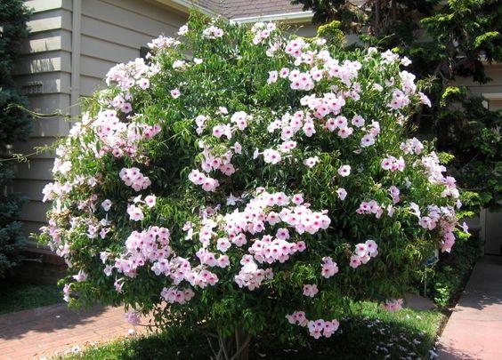 2015 August 05 - PlantaSonya - O seu blog sobre cultivo de plantas ...