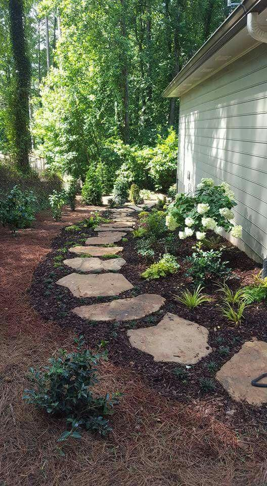 Do You Know Caloce Phalus In 2020 Side Yard Landscaping Shade
