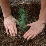 May help--Save The Environment By Planting Trees