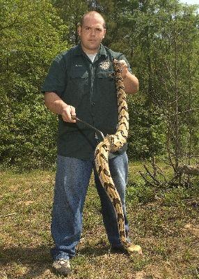 Largest Copperhead On Record | Timber Rattlesnake | Enviro ...