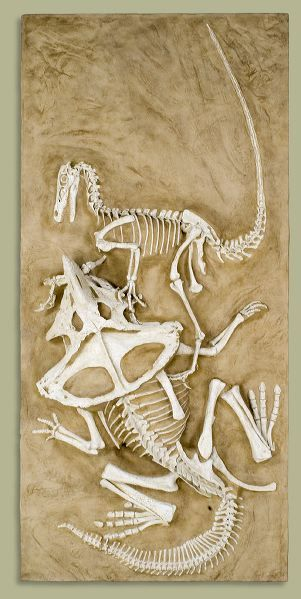 Paleontologists found two dinosaurs frozen in battle as fossils! - Science - Jul 18, 2012 - Interesting Facts and Fun Facts - OMG Facts