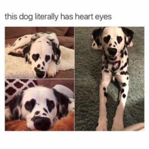 this dog has special markings