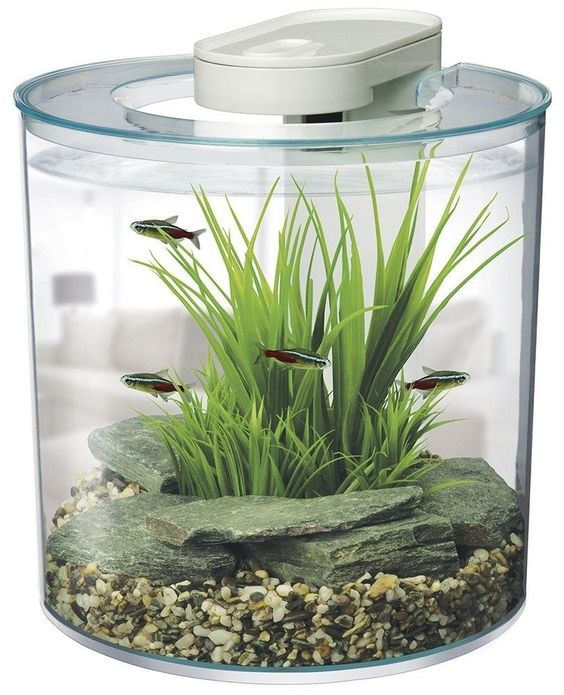 #Ebay#Aquarium#Fish#Tank#10#Liters#Led#Light#Intergrated#Filter#Desktop#Little#Space