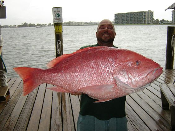 Old Salt Photo of the Week - American Red Snapper: Tommy Butler