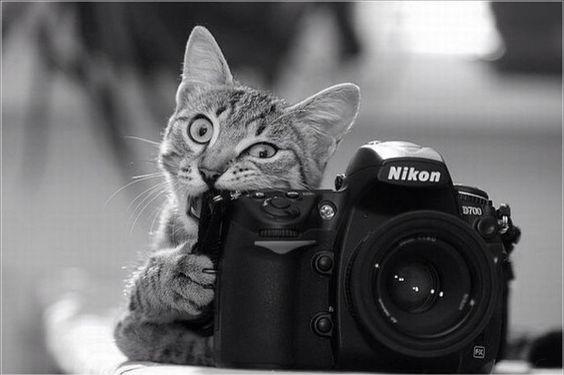 Shooting Better Quality Video on the Nikon D5100
