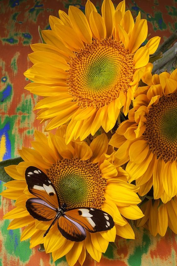 SUNFLOWERS AND BUTTERFLY.....PARTAGE OF MARGARET WORSHAM.....