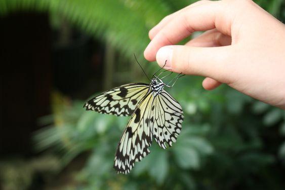 """""""Cervia: Casa delle Farfalle – im Reich der Schmetterlinge"""" by @meehrerleben"""