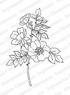 Sweet Briar Rose -: