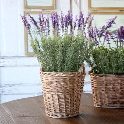 "The vision of lavender in a natural baskets give us a yearning for warm sun on our faces and the great outdoors. Enjoy this faux lavender plant all year round with minimal care and attention. Dimensions & More Small: 8"" x 23"" Large: 11"" x 25.5"" Includes basket and all the lavender seen here. Shipping & Returns"