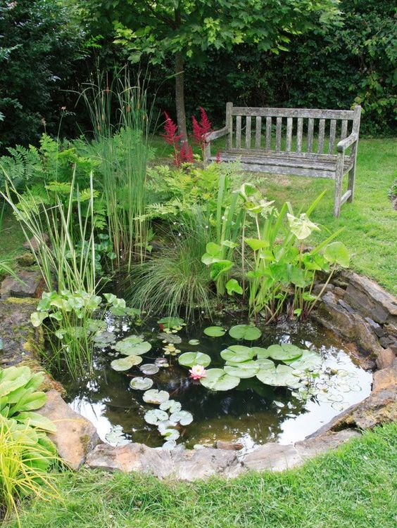 Small water garden nice work on this one gardening for Small pond care