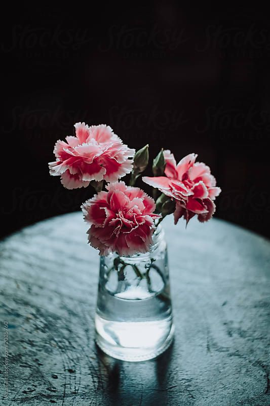 Bouquet Of Pink Carnations In Small Glass Vase By Vera Lair For Stocksy United Small Glass Vases Pink Carnations Vase
