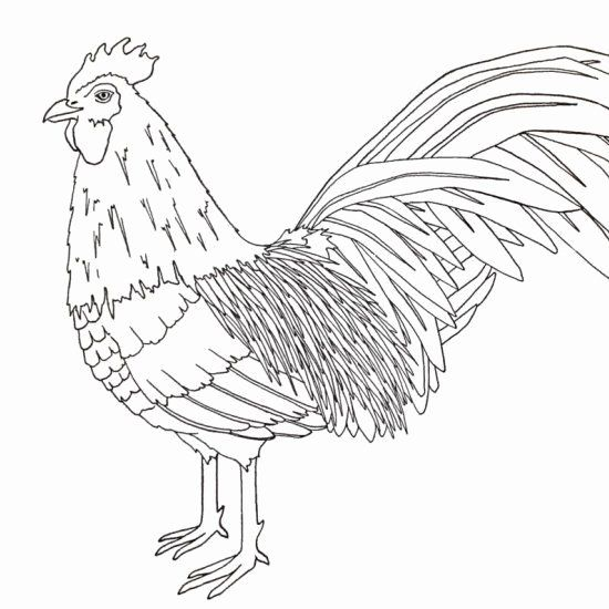 32 Year Of The Rooster Coloring Page In 2020 Coloring Pages