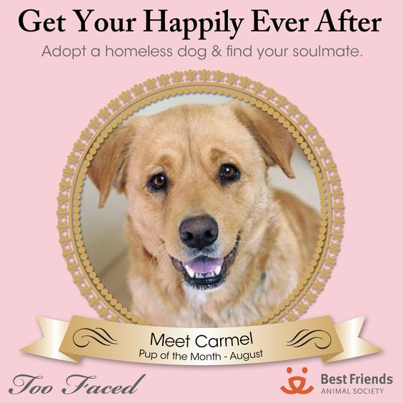 August Pup of the Month:  http://bestfriends.org/Adopt-a-Pet/Sanctuary-Animals/Search/Dog/24620198/ #toofaced #crueltyfree #rescue