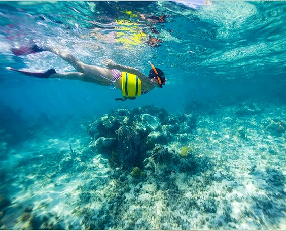 Snorkeling in the Caribbean! Check out our website thetravelmechanic.com to book a trip and jump right in!