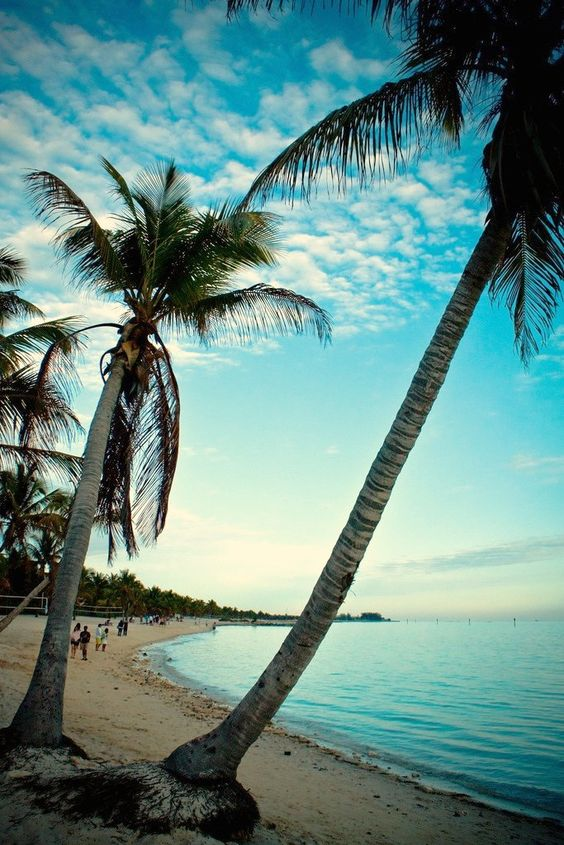 Palm trees at sunset. Key West, Florida.
