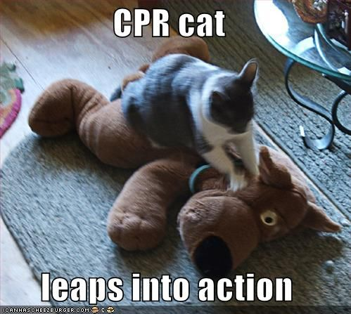 Essay about why CPR is important?