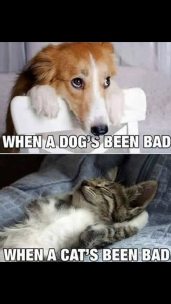 If You Like Save Follow For More The Difference Between Dogs And Cats Catmemes Cat Dog Pets C Funny Animal Pictures Cute Funny Animals Funny Cat Memes