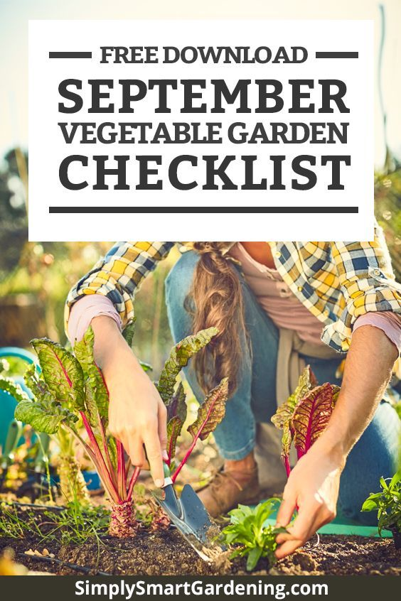 What To Do In Your Vegetable Garden This September Early Fall