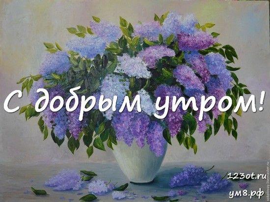 S Dobrym Utrom Krasivaya Kartinka Fotografiya S Cvetochkami Cvety