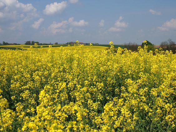 Leuchtend gelbe Rapsfelder, blaue Seen und grüne Wiesen! Gut Suckow ist nur 1h von Berlin entfernt- eine andere Welt