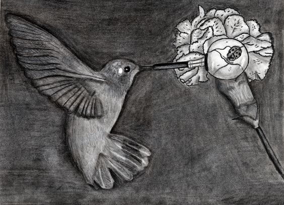Hummingbird with magnifying glass as beak looking at bug on flower.  Original drawing.
