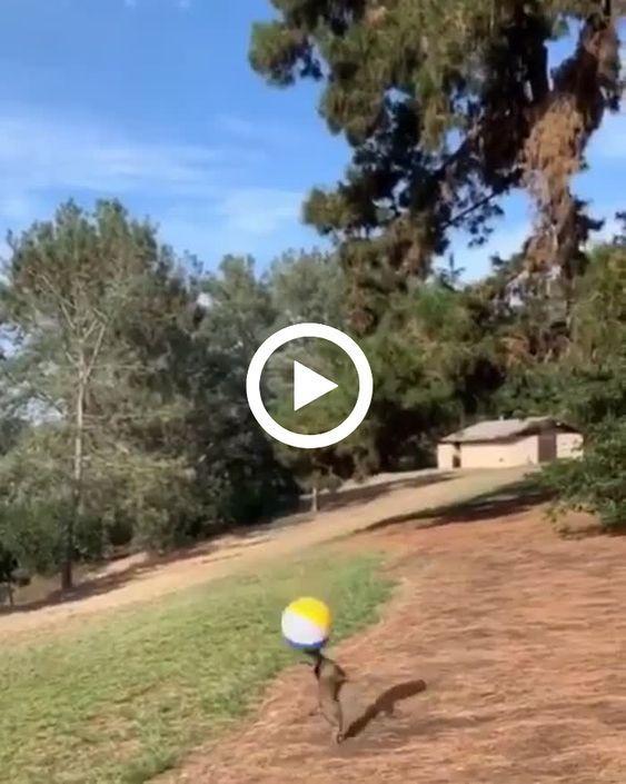 Um cachorro que é craque jogando bola