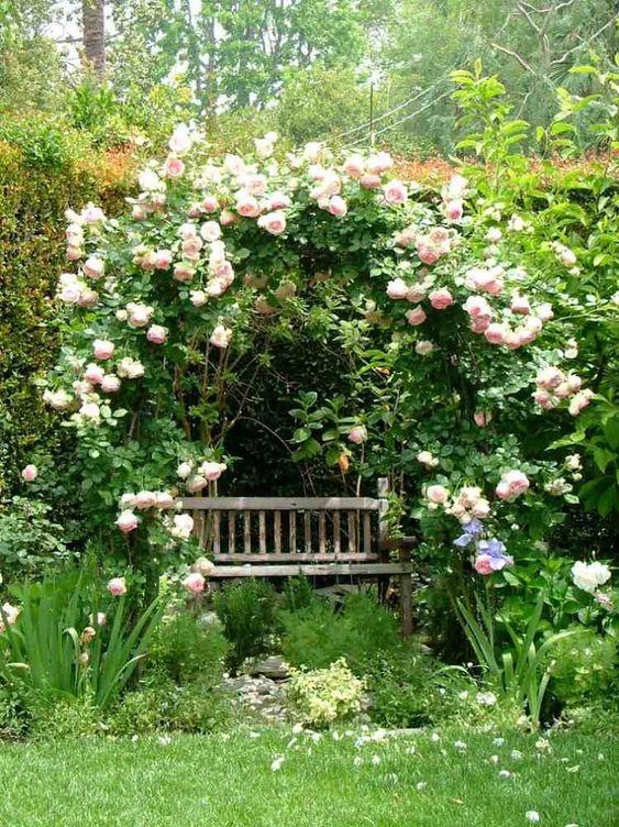 jardin Feng Shui: zone romantique avec banc en bois et rosiers grimpants: